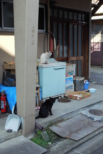 Today's Cat@200900804