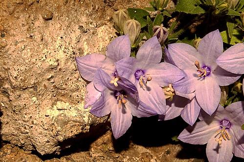 La roccia in fiore