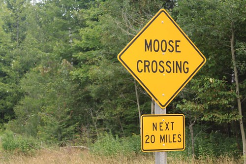 Yeah, bring on the moose!