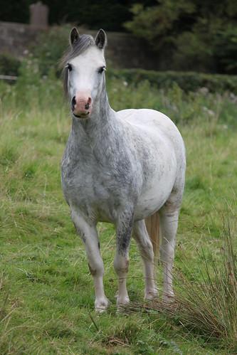 Ripley Horses