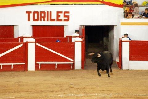 Corrida de Toros Feria Melilla 2009 345