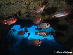 cueva del tiburón