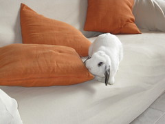 Milka tastes pillows (*the alla menta*) Tags: snowflake orange white house rabbit bunny home casa conejo haus pillow sofa tasting maison milka divano bianco blanc arancio lapin arancione coniglio cuscino coussin