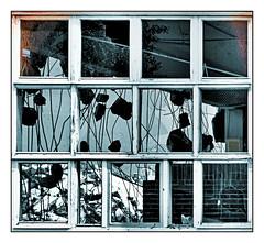 parochialism falling apart (Sigrid Klop) Tags: windows architecture decay fenster demolition ventanas ramen sigrid verval hokjesgeest parochialism