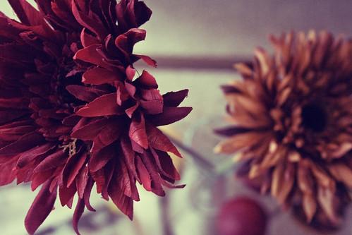 fallflowersone