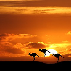 Australia (Heaven`s Gate (John)) Tags: travel sunset vacation nature silhouette landscape dramatic australia kangaroo wallaby imagination topf1000 100faves 10faves johndalkin heavensgatejohn sunsetmania saariysqualitypictures australia2009 hallglorymorningwaysep2011 peregrino27newvision