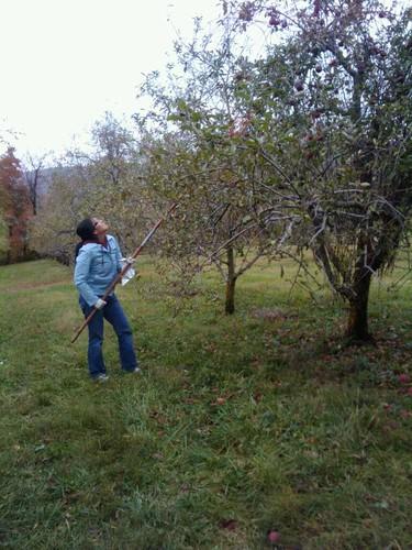 Allicia Picking Apples