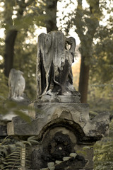 juedischer_friedhof_waehring_20091025_064 (negotiable_me) Tags: vienna plants austria jewish melancholy 2009 cementery funereal 1180 jewishcementery waehring