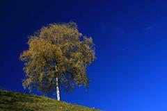 autumn in montafon (diamir8000) Tags: blue autumn sky nature leaves yellow canon geotagged austria pov montafon herbst natur perspective wideangle schruns gelb birch bltter birke vorarlberg mauren canoneos400d platinumheartaward tamron2875macro gettyimagessalq1