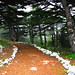 Cedars Path and Fog