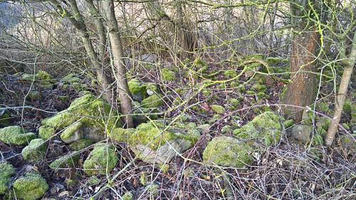 Vielgestaltige Landschaft, Halbtrockenrasen und bemooste Steine , NGID940905484