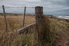 ºº PoST Waiinu Beach ºº (m+m+t) Tags: dscf367112 mmt meredithbibersteindesign newzealand taranaki northisland waiinubeach coast beach water sea tussock sandhills fence wood wind gale fujixt1 fujixseries fujimirrorless 1855mm