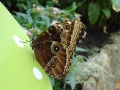 London 2009- Butterfly