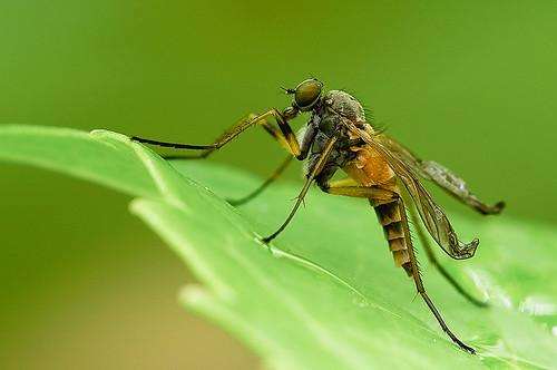 Комарац (аутор Paulo Brandão)