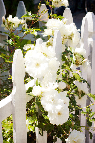 White Picket Fence ~ Balboa Island