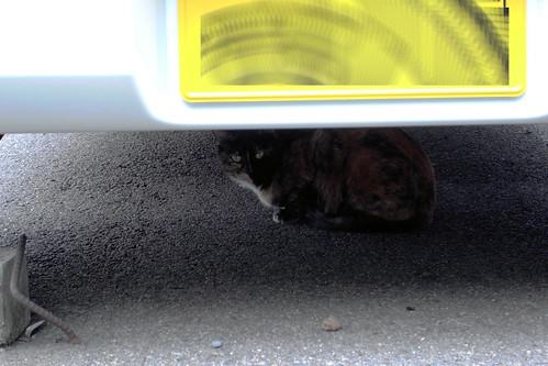 Today's Cat@20090531