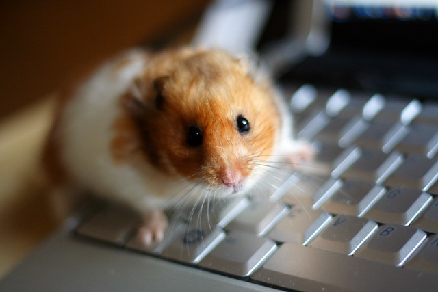 Hamsters are directly responsible for the demise of PCs