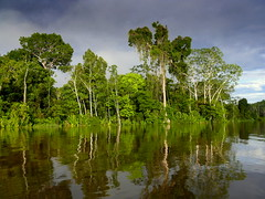Reflections On The Amazon River (Peru) (Butch Osborne) Tags: travel peru southamerica nature rio river amazon jungle traveling amazona amazonia mustsee amazonriver amazonrainforest amazonjungle rioamazona cameradeourobrasil overseasadventuretravel bucketlist
