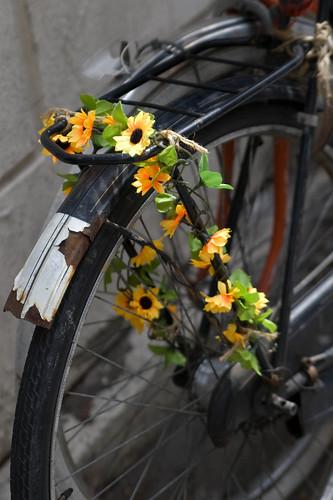 Fleurs de vélo