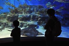 Melbourne 2009 - Melbourne Aquarium (15)
