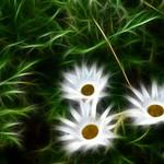 Fractalius - flower_1