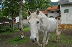 hi (upsa-daisy) Tags: summer schweiz switzerland suisse sommer svizzera albula graubünden grisons grigioni
