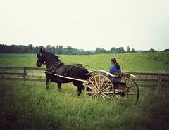 Cart (larissa_allen) Tags: horse black mare carriage blackhorse foal friesian poetryinmotion friesians friesianhorse blackmare larissaallen friesiandriving friesianmare friesianfoal babyfriesian carriagepulling drivingfriesian