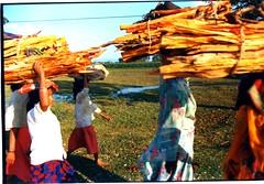 Nepal Wood Gathering