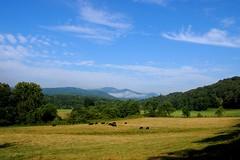 High Summer in North Georgia