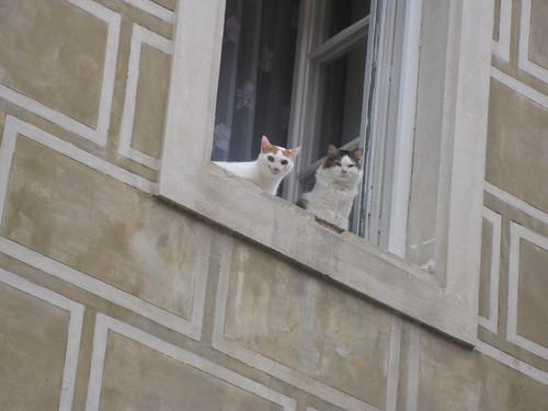 Gatos en una ventana. Praga