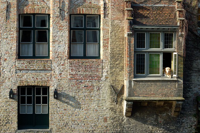 Windows and the dog ( Brugge )