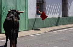 Preparando el pase de pecho (Leandro MA) Tags: toros serrada leandroma
