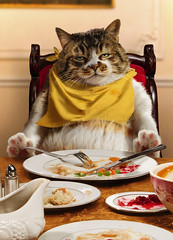 Happy Thanksgiving! (moggierocket) Tags: thanksgiving cat photomanipulation stuffed eating postcard bib 2009 mycat burp kedi avanti