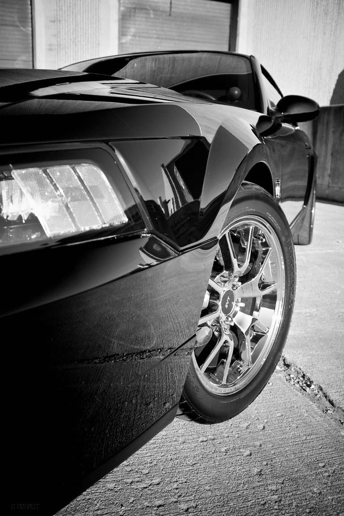 Terminator Mustang Forum