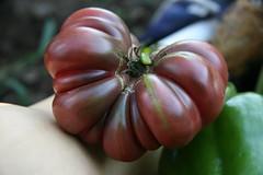 purple calabash
