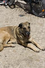 (Aislinn Ritchie) Tags: dog portugal lagos algarve