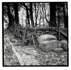 winter fodder (Graham1981) Tags: winter snow 6x6 squareformat hp5 monochromelandscape icehowgillfellsnorthwestenglandcumbriahasselbald