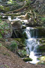 Forest waterfall (DaveMosher) Tags: nature forest waterfall