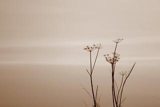 Sepia simplicity