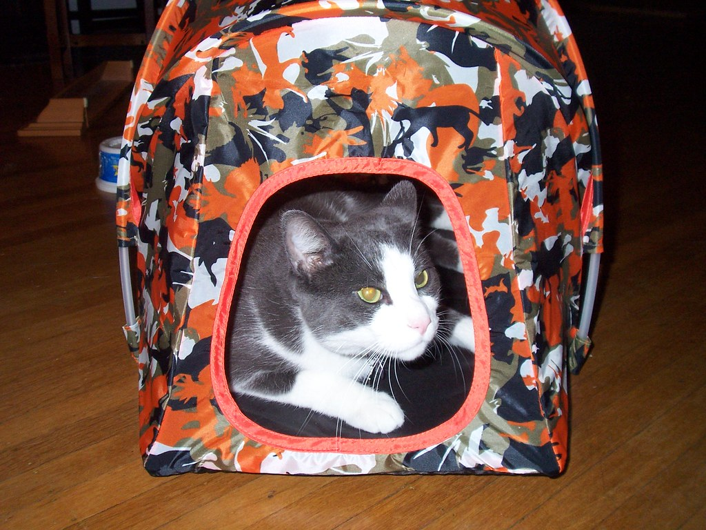 Ionu0027s Tent (twofishblu) Tags ikea cat kitty tent lair cattent fiercekitty & The Worldu0027s Best Photos of ikea and tent - Flickr Hive Mind