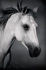 ( Maitha  Bint K) Tags: bw horse white black photography uae g1 2009     g1uae wwwg1uaecom