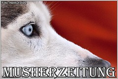 blueye Husky