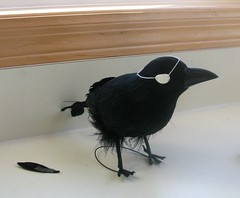 Crow with Eye Patch