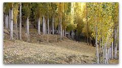 autumn (TARIQ HAMEED SULEMANI) Tags: autumn pakistan tourism trekking october hiking tariq nagar hoper concordians sulemani hopervalley