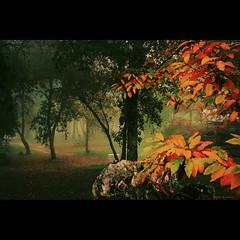 Parque (VIII) (Transmontano) Tags: tree textura portugal photoshop bragana braganca gpc vilaflor campismo coth 20fav idream topseven xoox transmontano ilustrarportugal spiritofphotography doubledragonawards artofimages addvf iniciaticaward imagofabulae portugalmagico magiayfotografia