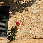 Une rose et un volet thumbnail