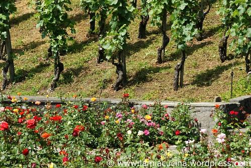 CH-8640 Rapperswil 5_2011 05 24_3859