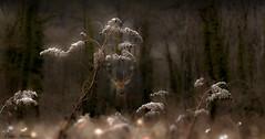 Balade en sous-bois (Didier HEROUX) Tags: sousbois forêt arbre balade rando leica raw panasonic didierheroux herouxdidier hautesavoie animal automne autumn novembre bokeh lumière nature france french chemin path extérieur outdoor