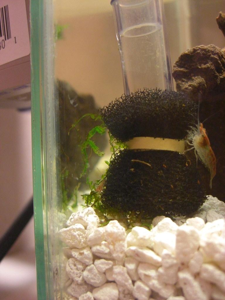 Baby Shrimp!