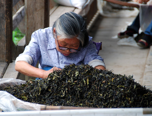 old lady sorting tea leaves, xiamei village